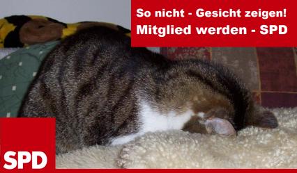 Ein Kater steckt seinen Kopf in ein Lamfell. Text: GEsicht zeigen - Mitgleid werden - SPD